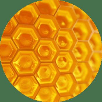 Pentapeptide - Cosmétique suisse anti-âge et anti-pollution